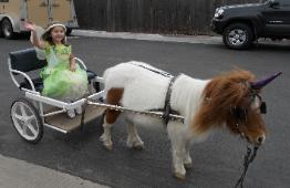 Photo of child in cart pulled by pony