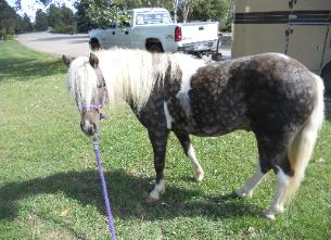 Pony Rides for Birthday Parties in Denver, CO